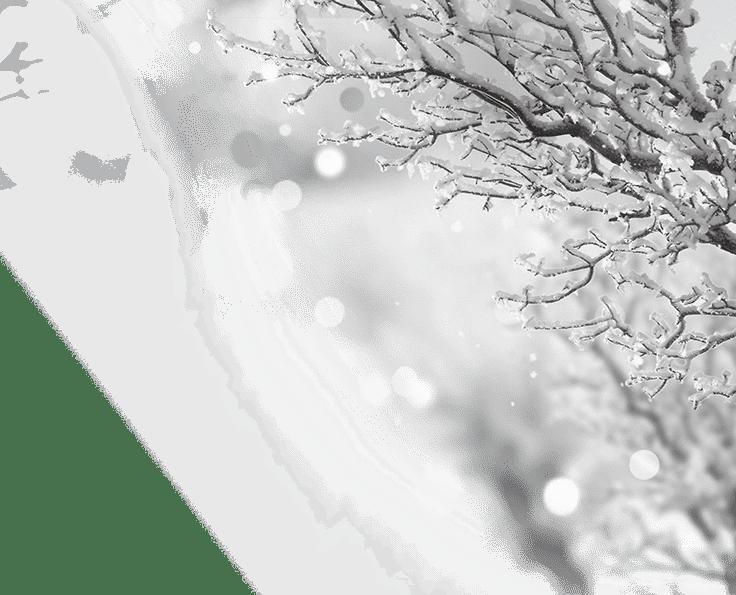 Winteraktion Rs Reich Schnee Baum