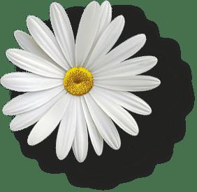 Blume Big Hinten