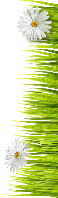 Gras Blumen Rechts